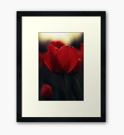 Red Tulips On Yellow Framed Print