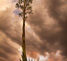 Agave under an Auburn Sky by Sue  Cullumber