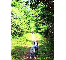 Penny in the Roan Gardens Photographic Print