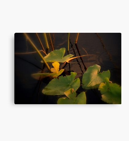 Mystery in light Canvas Print