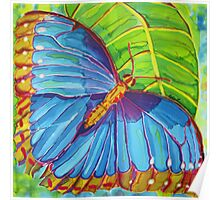 Blue Morpho Butterfly of the Rainforest Poster