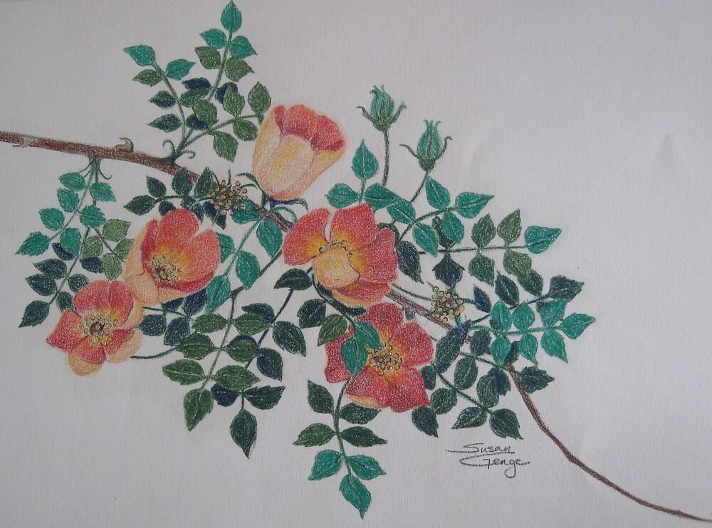 Copper Rose by Susan Genge