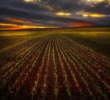 Rows by Stewart Watt