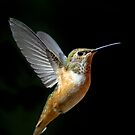 Angelic Hummer by Randall Ingalls