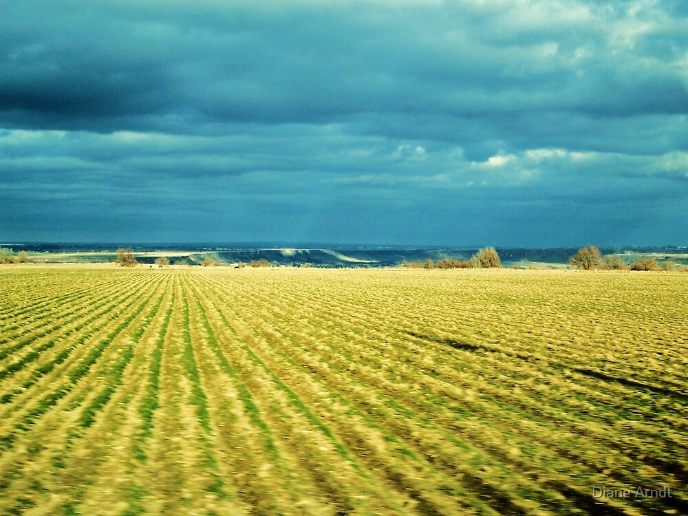 Drive By Fields Of Gold by Diane Arndt