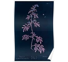 A curious herbal Elisabeth Blackwell John Norse Samuel Harding 1737 0056 Wormwood Inverted Poster