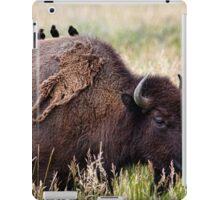 Bison and Blackbirds iPad Case/Skin