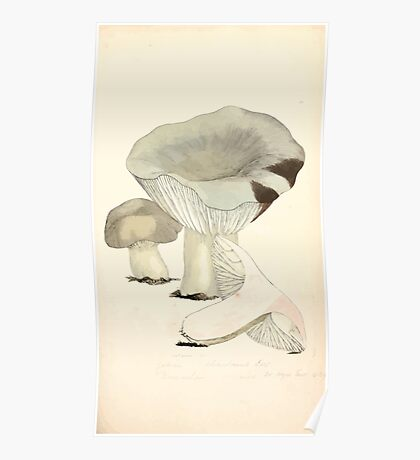 Coloured figures of English fungi or mushrooms James Sowerby 1809 0131 Poster