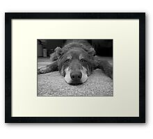 Bored Puppy Framed Print