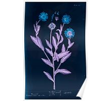 A curious herbal Elisabeth Blackwell John Norse Samuel Harding 1737 0274 Mary golds Marigold Marygold Inverted Poster
