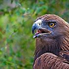 Golden Eagle Profile by Sue  Cullumber