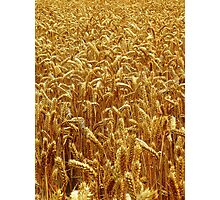 Harvest 2 - Grantham Photographic Print