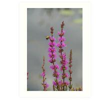 Bee Landing On Wetland Flower Art Print