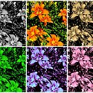 Collage of Day Lilies by Debbie Robbins