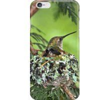 Mother Hummingbird on Nest iPhone Case/Skin