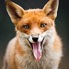 The Laughing Fox by Peter Denness