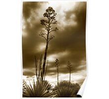 Agaves Poster