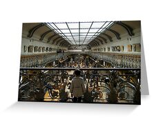 Little boy in the Museum of Natural history Greeting Card