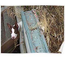 Charming Dog Poster