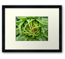 About to bloom Framed Print