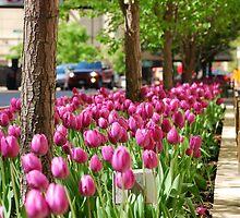 Tulips by phototraveler