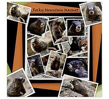 ROCKY MOUNTAIN MARMOT Photographic Print