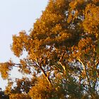 Ranga Tree by adgray