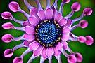 Nature's Kaleidoscope by Renee Hubbard Fine Art Photography