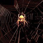 Come Into My Tangled Web.... by LauraBroussard