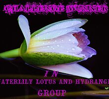 Challenge Winner Banner for the Waterlily, Lotus and Hydrangea Group by Mattie Bryant