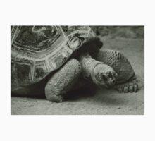 Giant Tortoise  Baby Tee