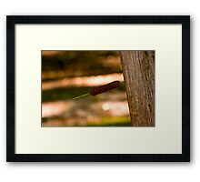 Stuck Pussy Willow Framed Print