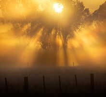 Frosty Sunrise - Mulwala by Hans Kawitzki