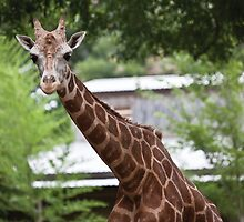 Tall n' Proud - Zoo of Acadiana by Jason C. Sonnier