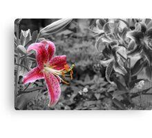 Enhanced White Lily  Canvas Print