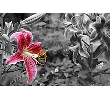 Enhanced White Lily  Photographic Print