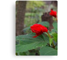 Sad Red Flower Canvas Print