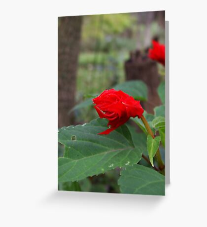 Sad Red Flower Greeting Card