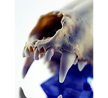 Light Box - Crystal Skull Photographic Print