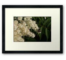 Flora & Fauna of Montana series- image 4 Framed Print
