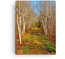 Dance of the Silver Birches Canvas Print