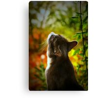 Morning Welcome Canvas Print