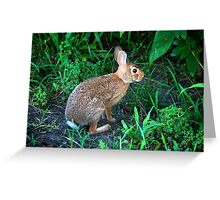A cottontail rabbit @ Willow Water Works Greeting Card