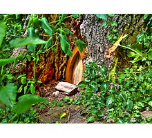 Entrance to Fairyland Photographic Print
