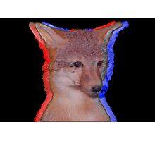 Cool Fox Photographic Print