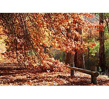 Autumn Landscape3 Photographic Print