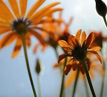 Orange Glory by Kristin Colson