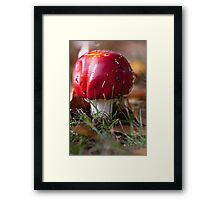Toadstool at front tree 20100526 0997 Framed Print