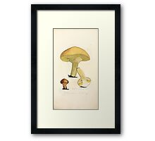 Coloured figures of English fungi or mushrooms James Sowerby 1809 0753 Framed Print