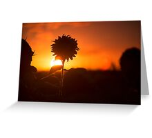 Sunflowers in a field in the afternoon. Greeting Card